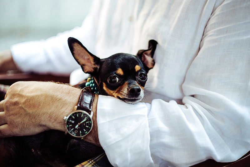 6 Common HOA Pet Policies Every Board Should Know